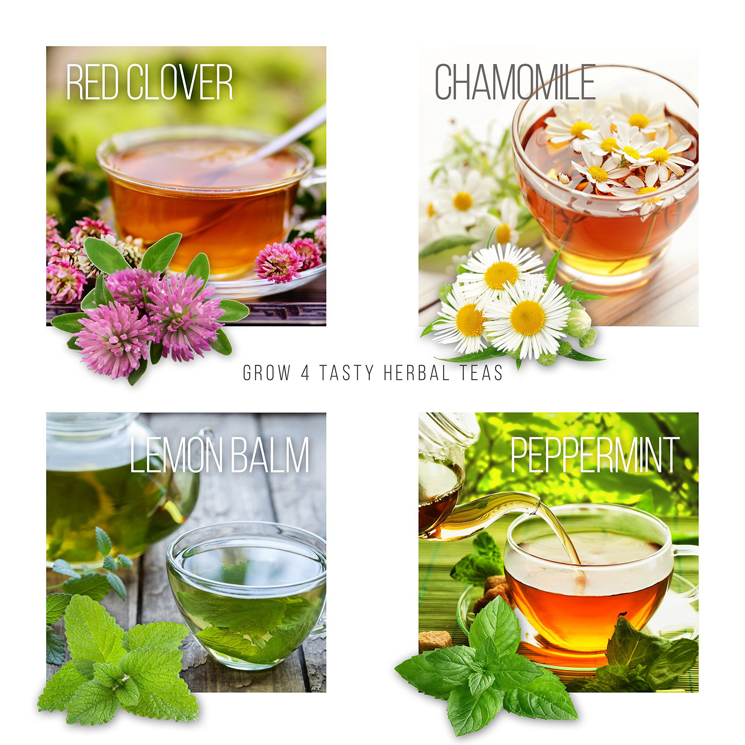 Grow 4 of Your Own Organic Herbal Tea Kit + Stainless Steel Tea Infuser | Chamomile, Peppermint, Lemon Balm, Red Clover | Everything Included: Pots, Soil, Seeds, Booklet, Bamboo Plant Labels by Planters' Choice (Image #2)