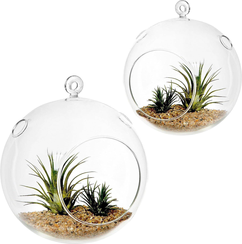7-Inch Clear Glass Hanging Air Plant Terrarium Ball, Votive Candleholder, Set of 2