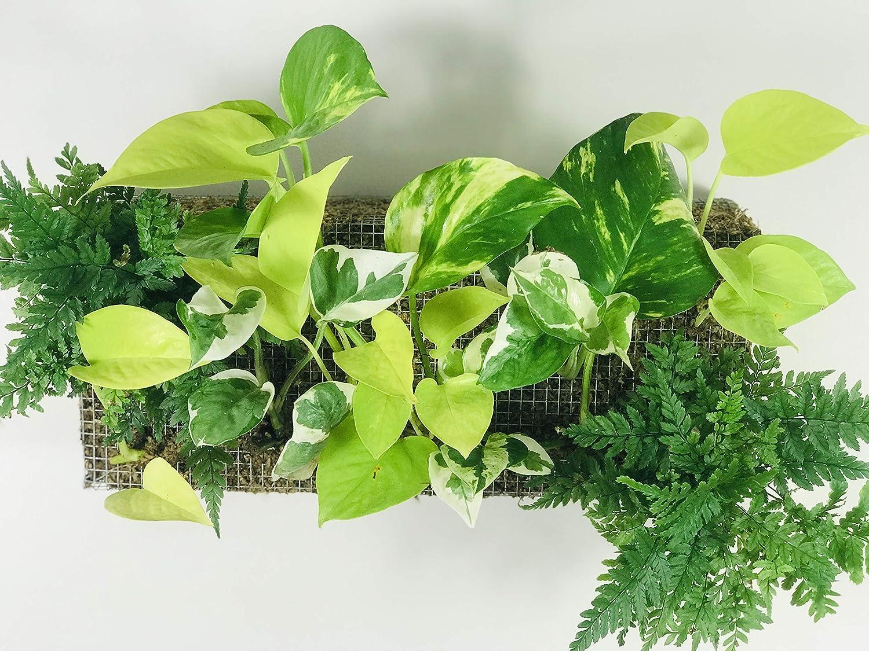 Mur végétal pas cher ( cliquez pour plus d'infos )