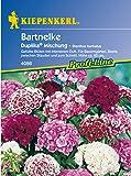 Sperli Blumensamen Bartnelken Duplika Mischung, grün