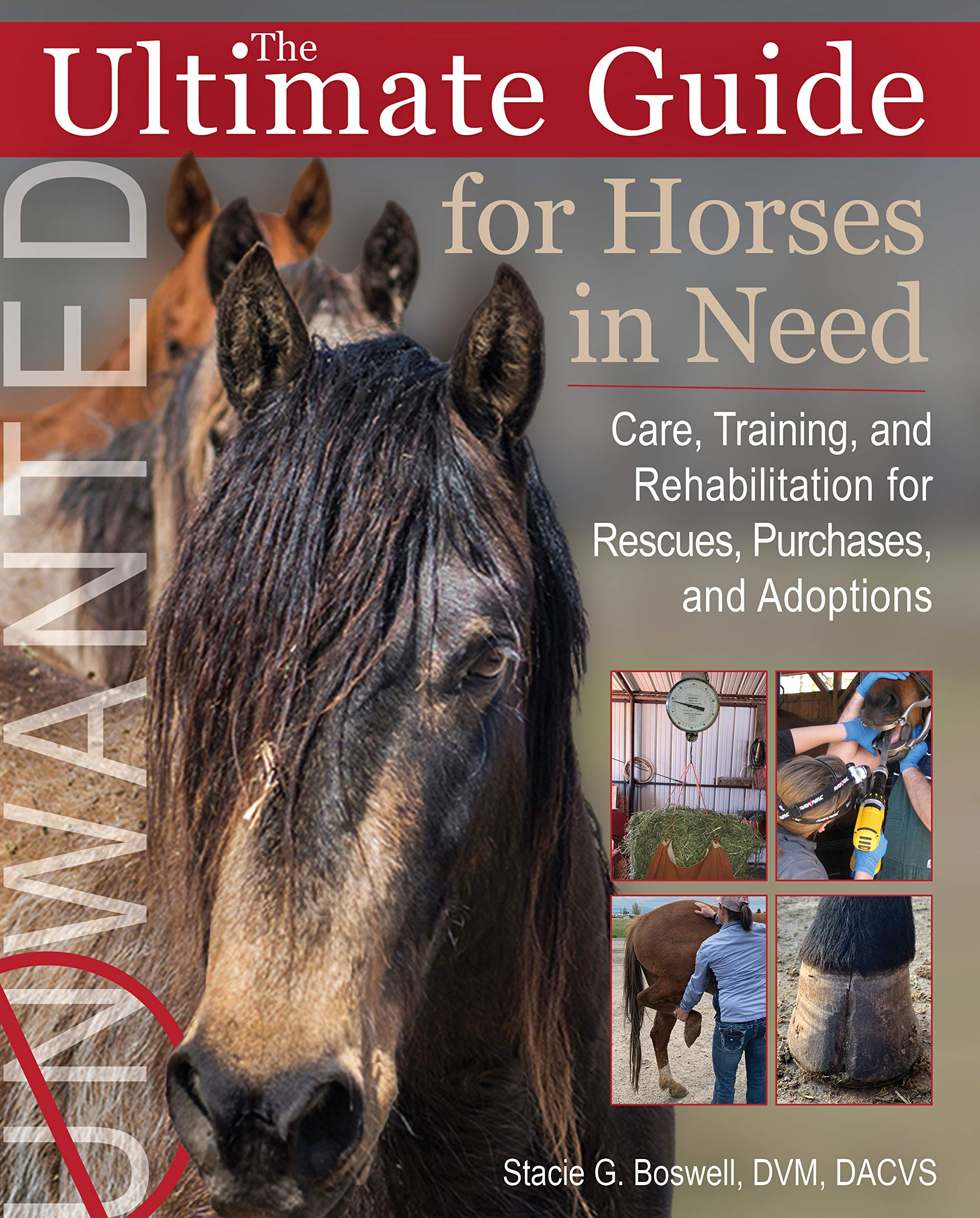 The Ultimate Guide For Horses In Need  Care Training And Rehabilitation For Rescues Purchases And Adoptions