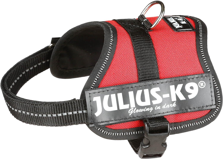 Julius-K9 Baby 2, 33-45 cm, Rojo: Amazon.es: Productos para mascotas
