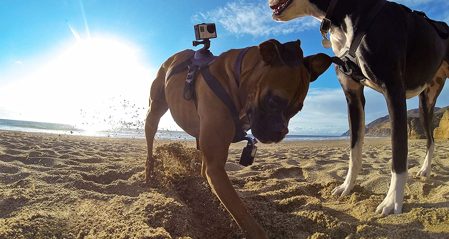GoPro Dog Fetch Camera