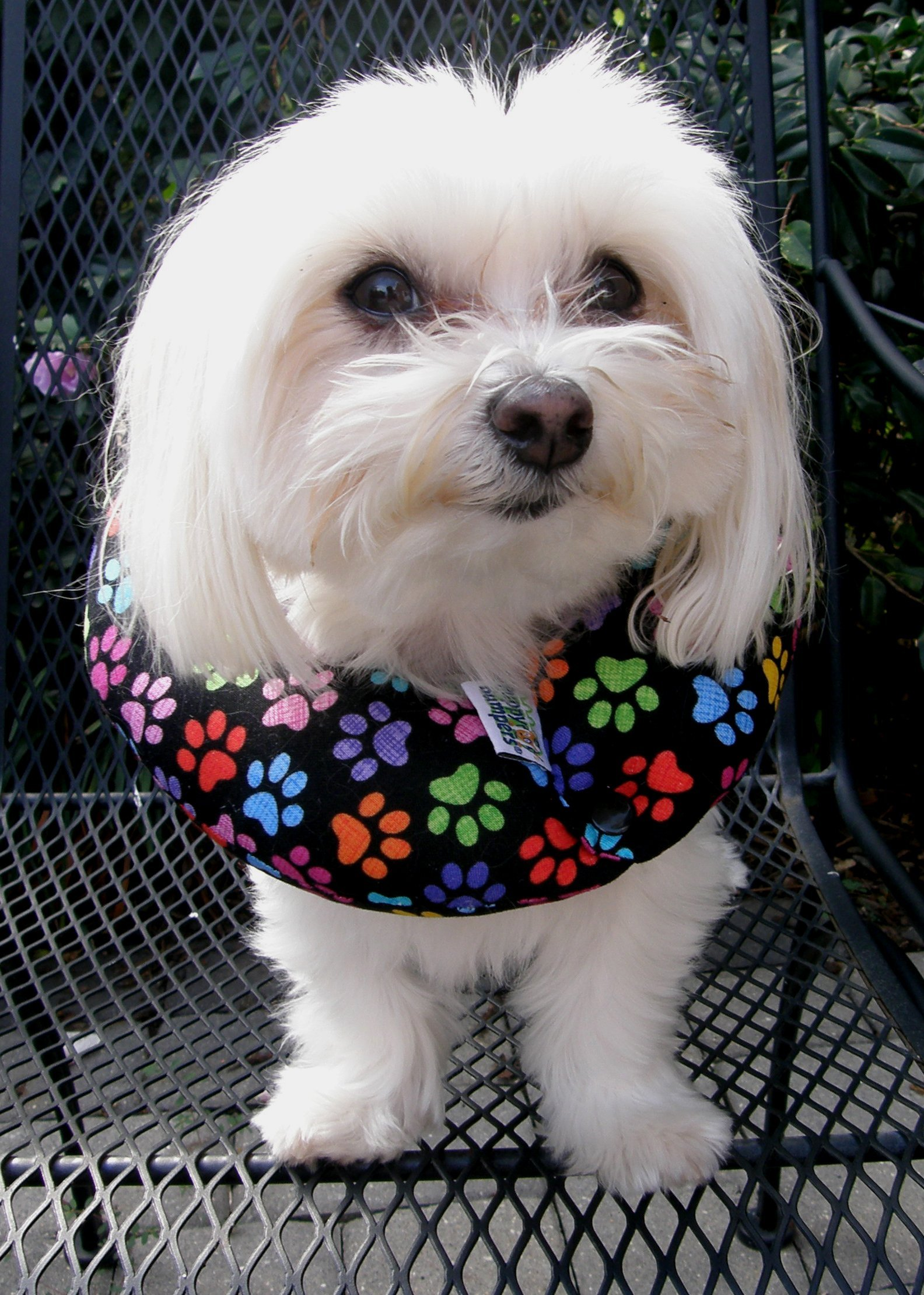 Puppy Bumpers Keep Your Dog on The Safe Side of The Fence - Rainbow Paw (up to 10'')
