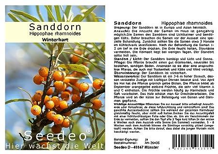 Cananga odorata 20 Samen Seedeo® Ylang-Ylang Parfümbaum
