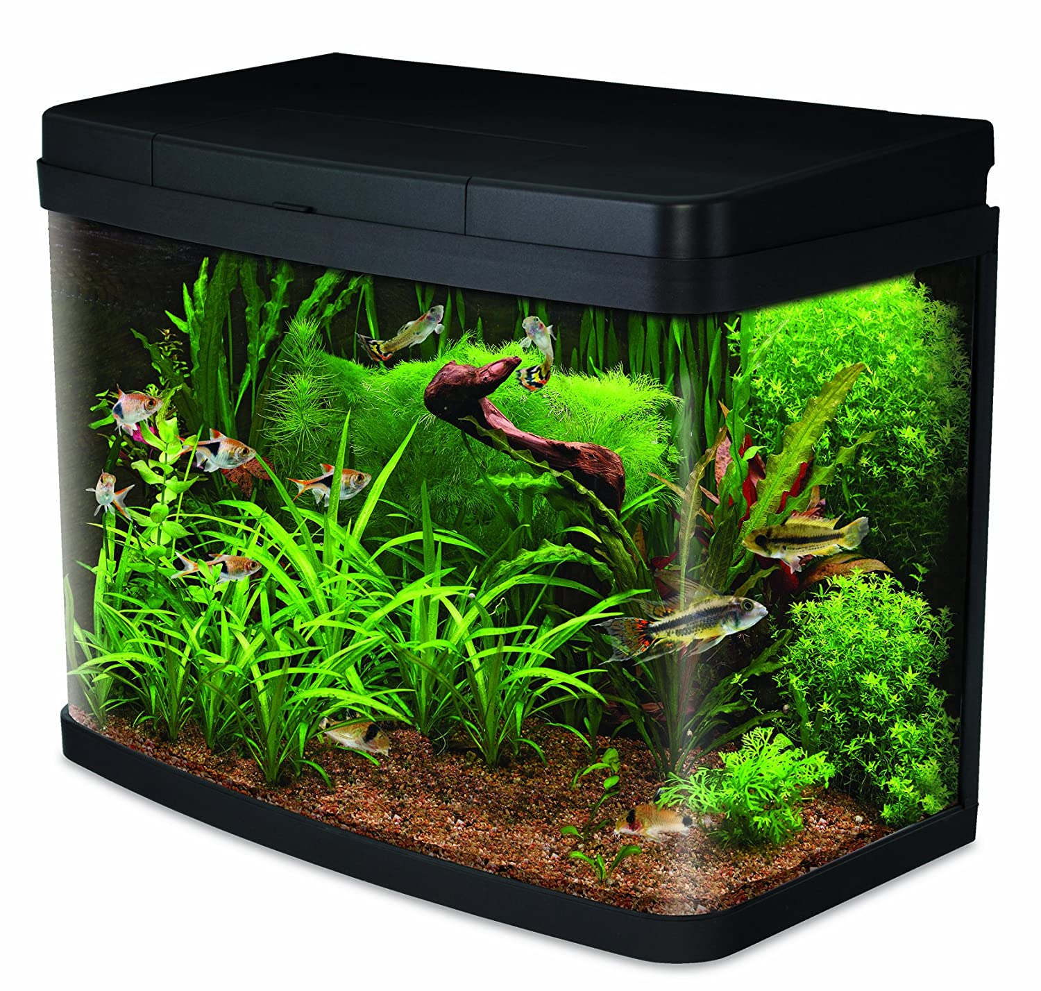 Is a 40 litre fish tank a good size aquatics world for Good fish for small tanks