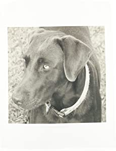3dRose fl_14144_1 Chocolate Lab Black and White Garden Flag, 12 by 18-Inch