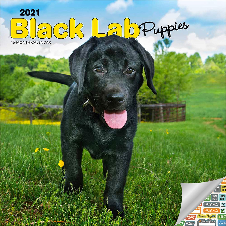 Black Labrador Retriever Puppies Calendar 2021 Bundle - Deluxe 2021 Black Lab Puppies Wall Calendar with Over 100 Calendar Stickers (Black Labs Puppies Gifts, Office Supplies)