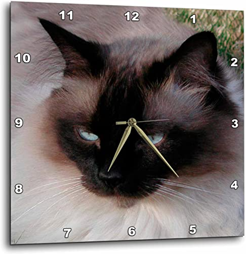 3dRose dpp_1220_3 Siamese Cat-Wall Clock, 15 by 15-Inch