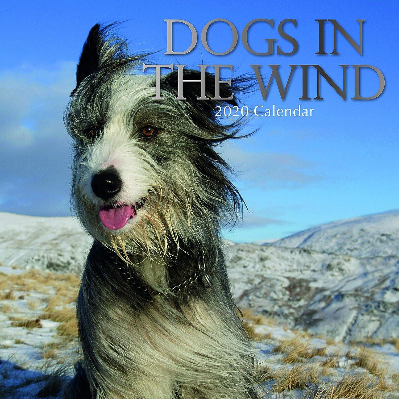 2020 壁カレンダー - 風の中の犬 12 x 12インチ 月間表示 16ヶ月 ペット 動物テーマ 180リマインダーステッカー付き