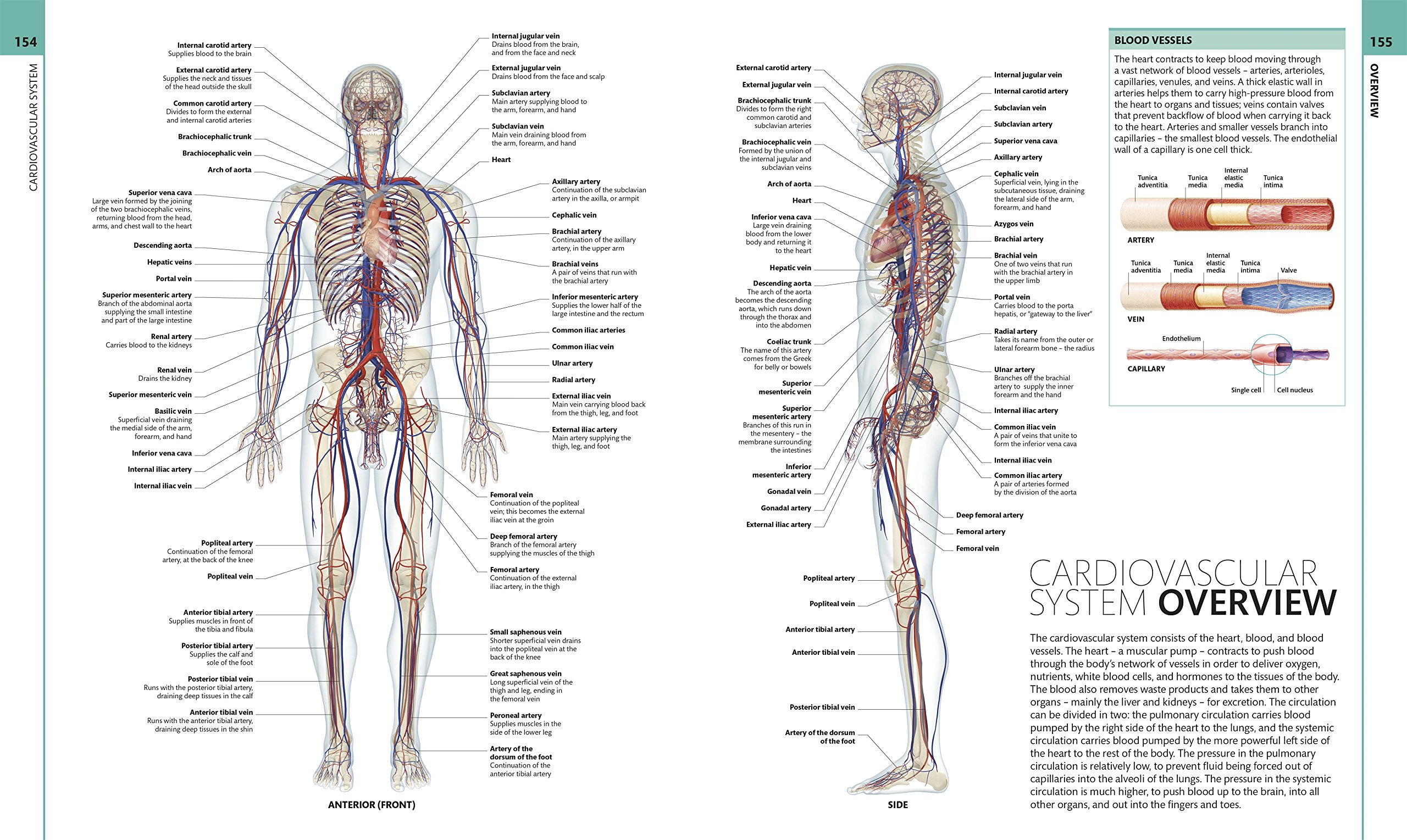 Human Anatomy The Definitive Visual Guide Amazon Alice