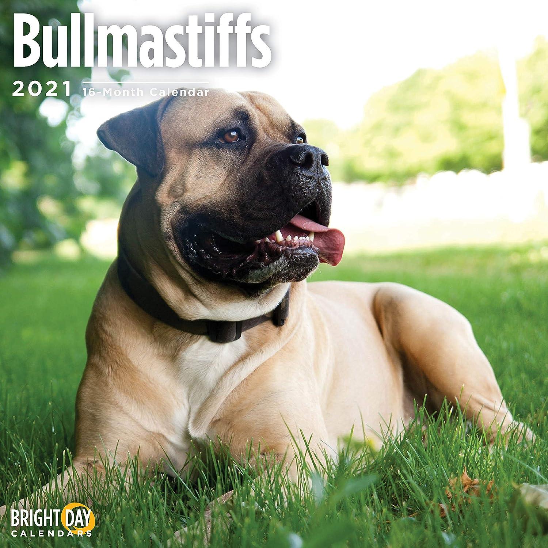 2021 Bullmastiffs Wall Calendar by Bright Day, 12 x 12 Inch, Cute Dog Puppy