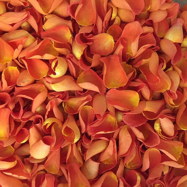 Burgundy, 2 litres Biodegradable Rose Petal Wedding Confetti