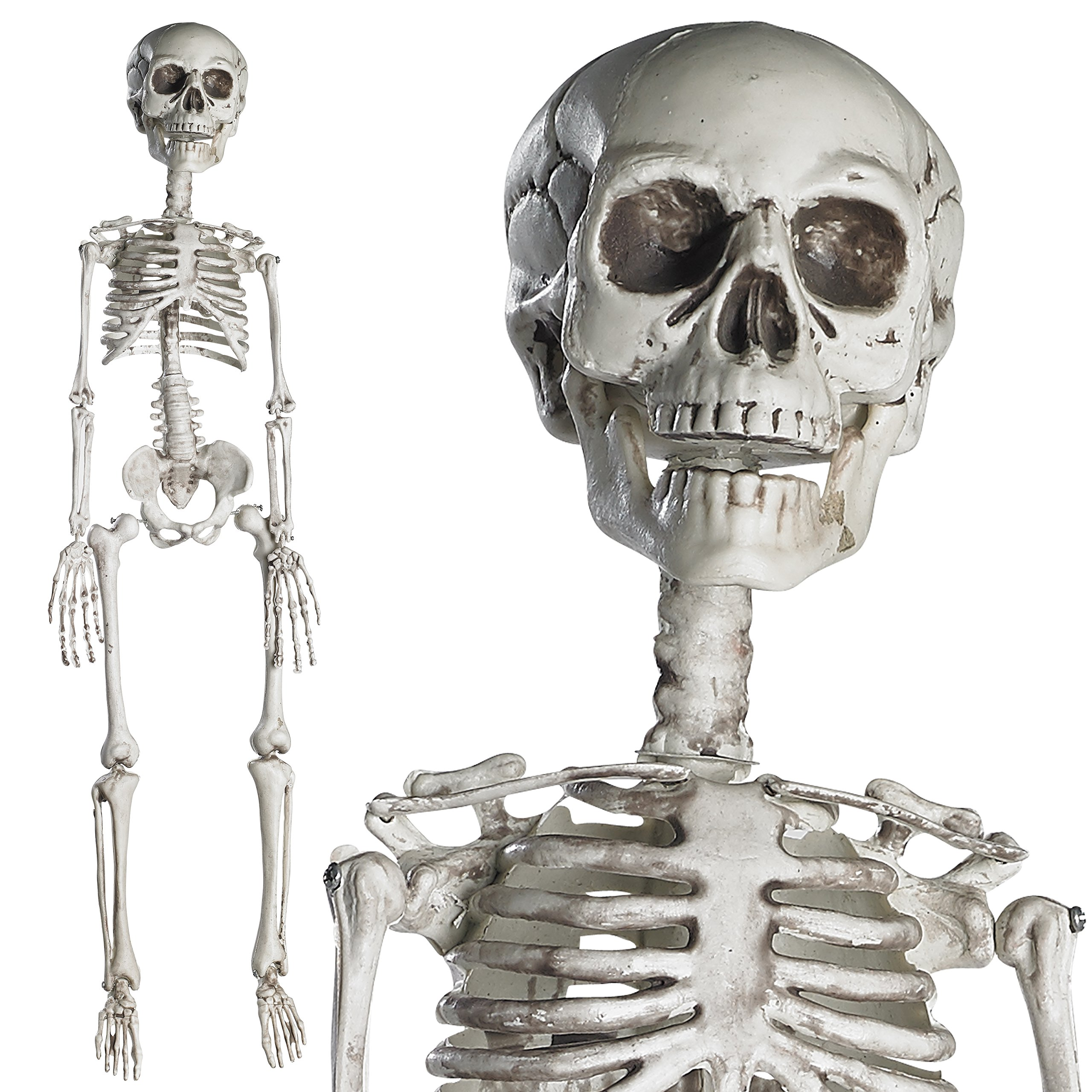 Prextex 30'' Halloween Skeleton- Full Body Halloween Skeleton with Movable Joints for Best Halloween Decoration by Prextex