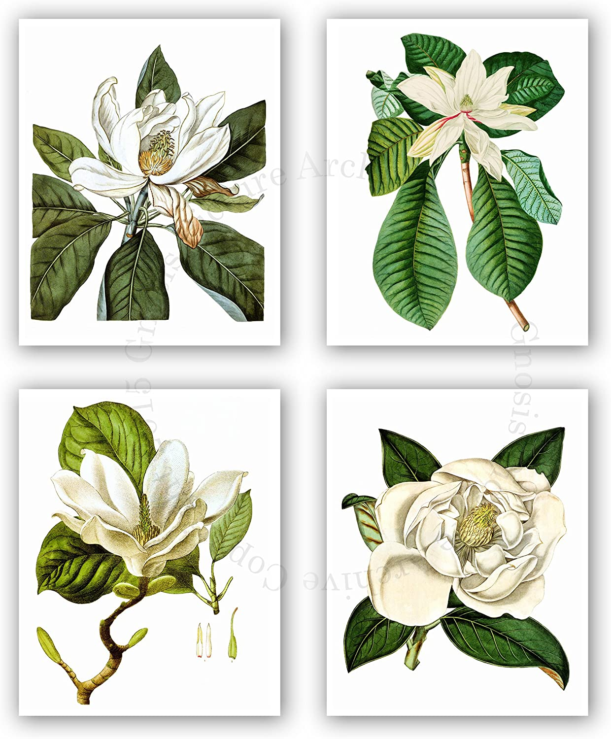 Amazon Com Magnolia Flowers Mothers Day Gift Idea Botanical Wall Art Unframed Set Of 4 Wall Art Prints Home Decor Posters Prints