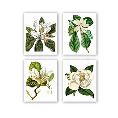 Magnolia Flowers Vintage Botanical Wall Art Unframed Set of 4 Wall Art Prints Home Decor