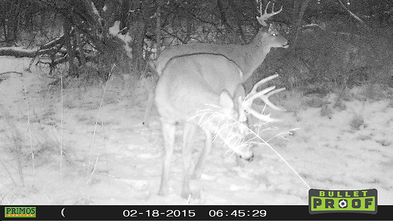 amazon com primos 6mp bullet proof trail camera with low glow
