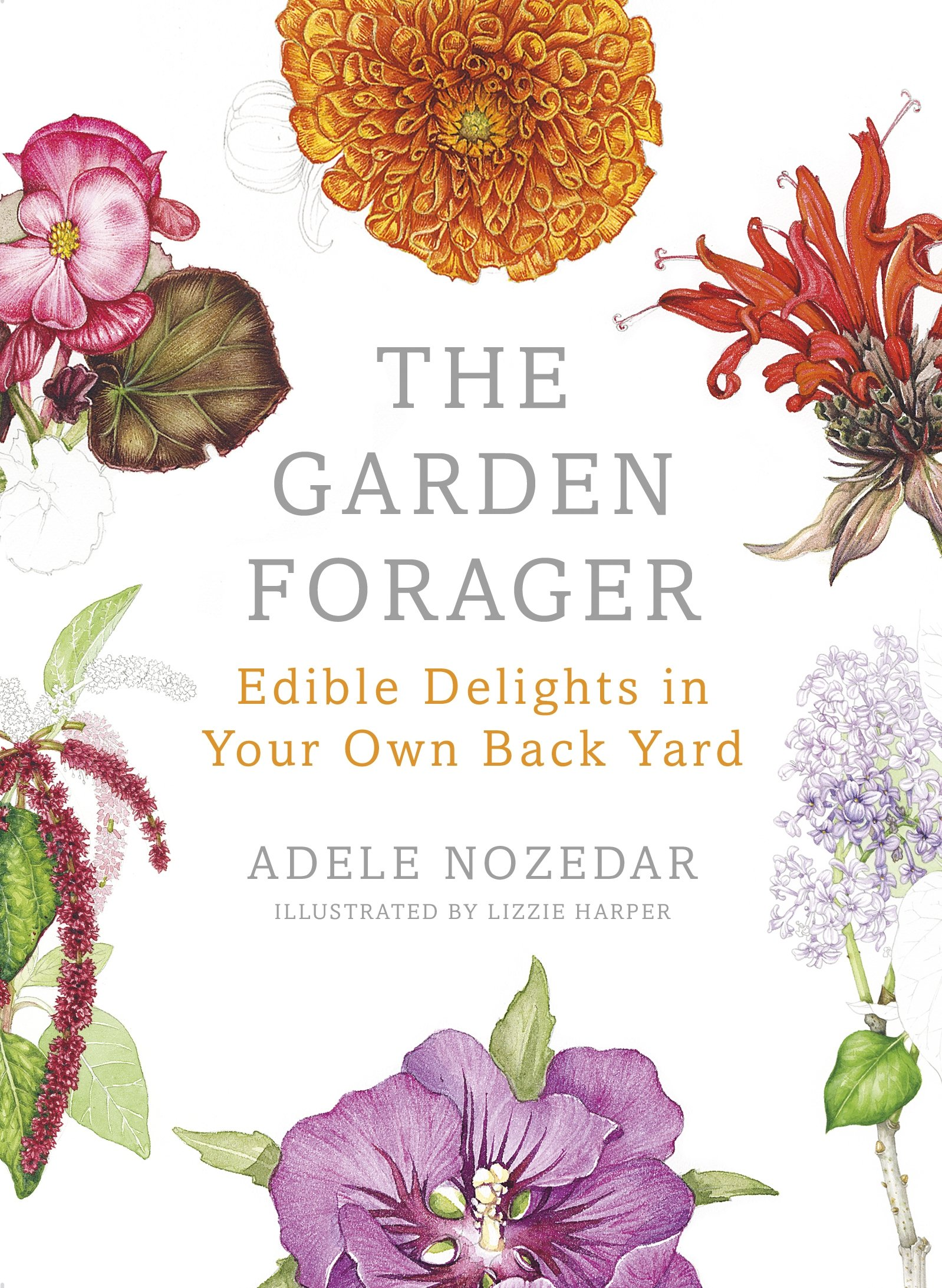 The Garden Forager: Edible Delights in your Own Back Yard: Amazon.co ...