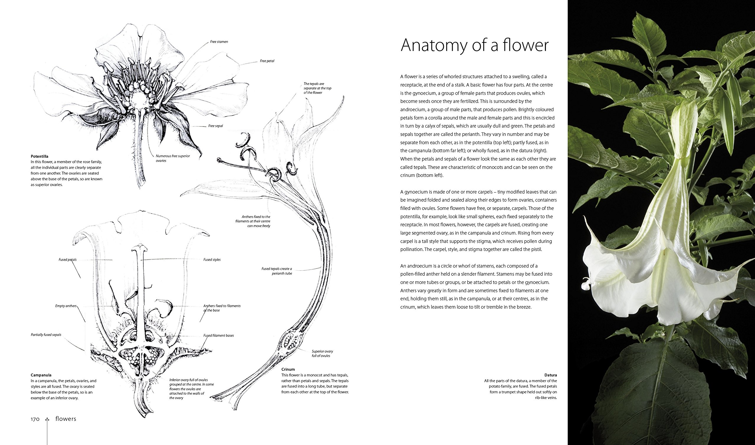 Botany for the Artist: An Inspirational Guide to Drawing Plants ...