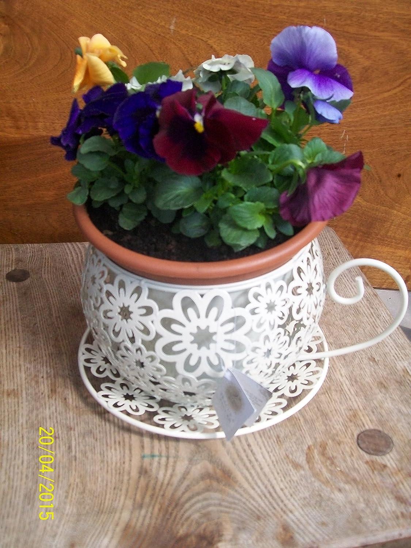 Amazon.com: Shabby Vintage Chic Tea Cup Planter Plant Pot Holder ...