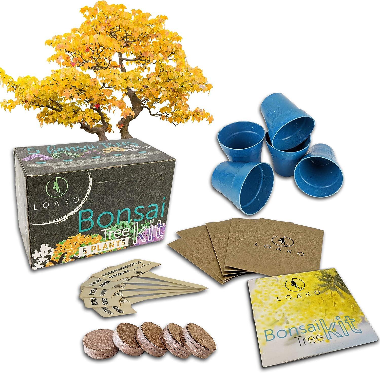 Bonsai Tree Starter Kit | Grow 5 Bonsai Trees | Beginner Friendly | Complete DIY Growing Kit | Indoor Growing Plant | Perfect Gift Idea
