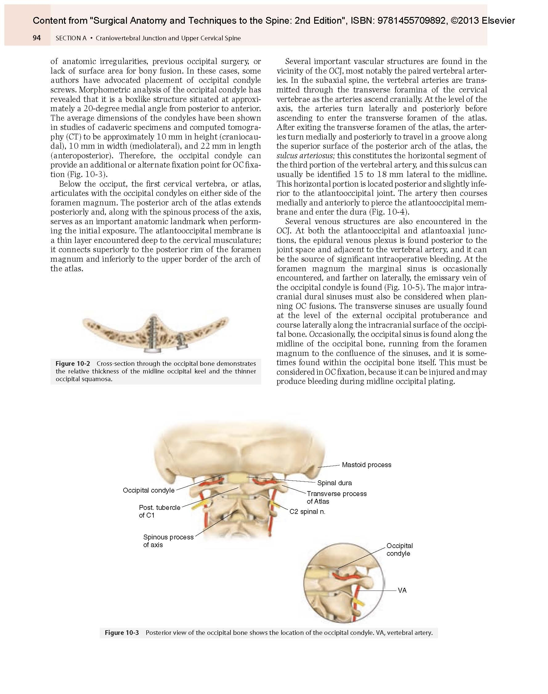 Buy Surgical Anatomy And Techniques To The Spine Expert Consult