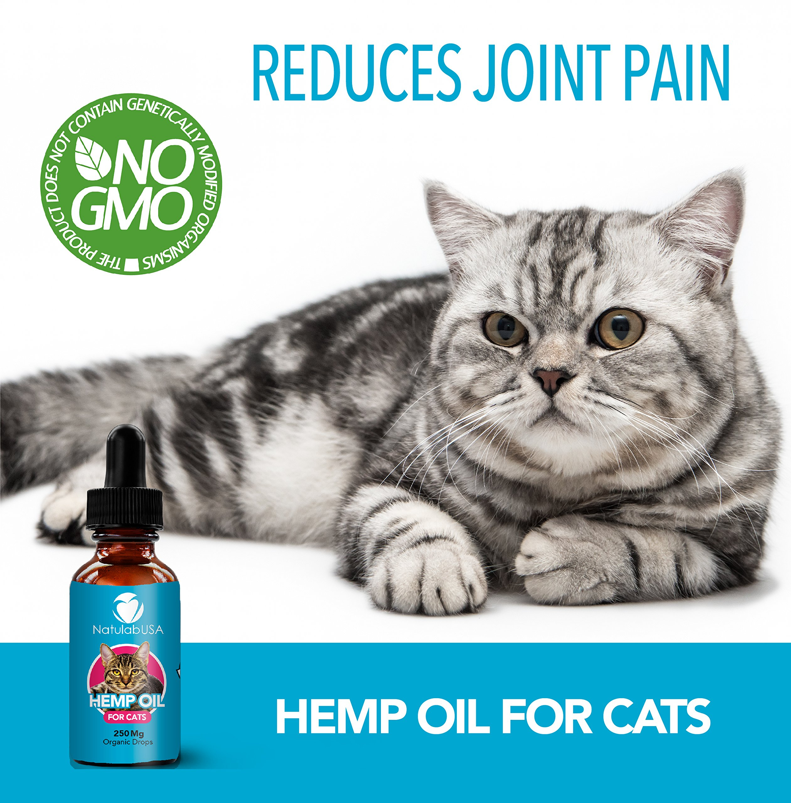 Cat health Products - Hemp-Oil-For-Cats