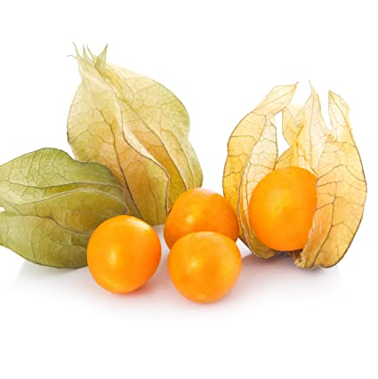 Amazon com: CAPE GOOSEBERRY Live Plant - Edible Physalis