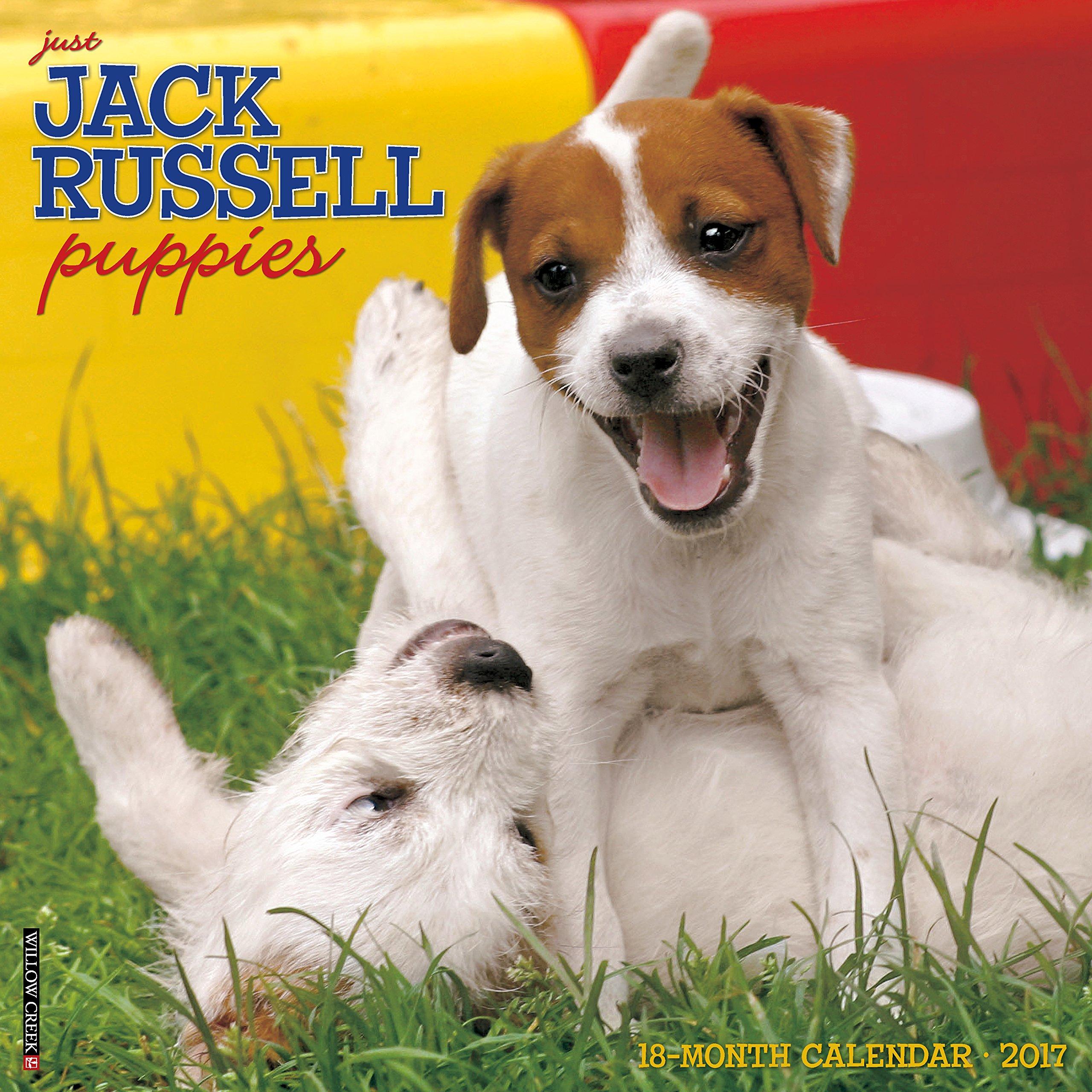 Just Jack Russell Puppies 2017 Wall Calendar (Dog Breed Calendars) pdf