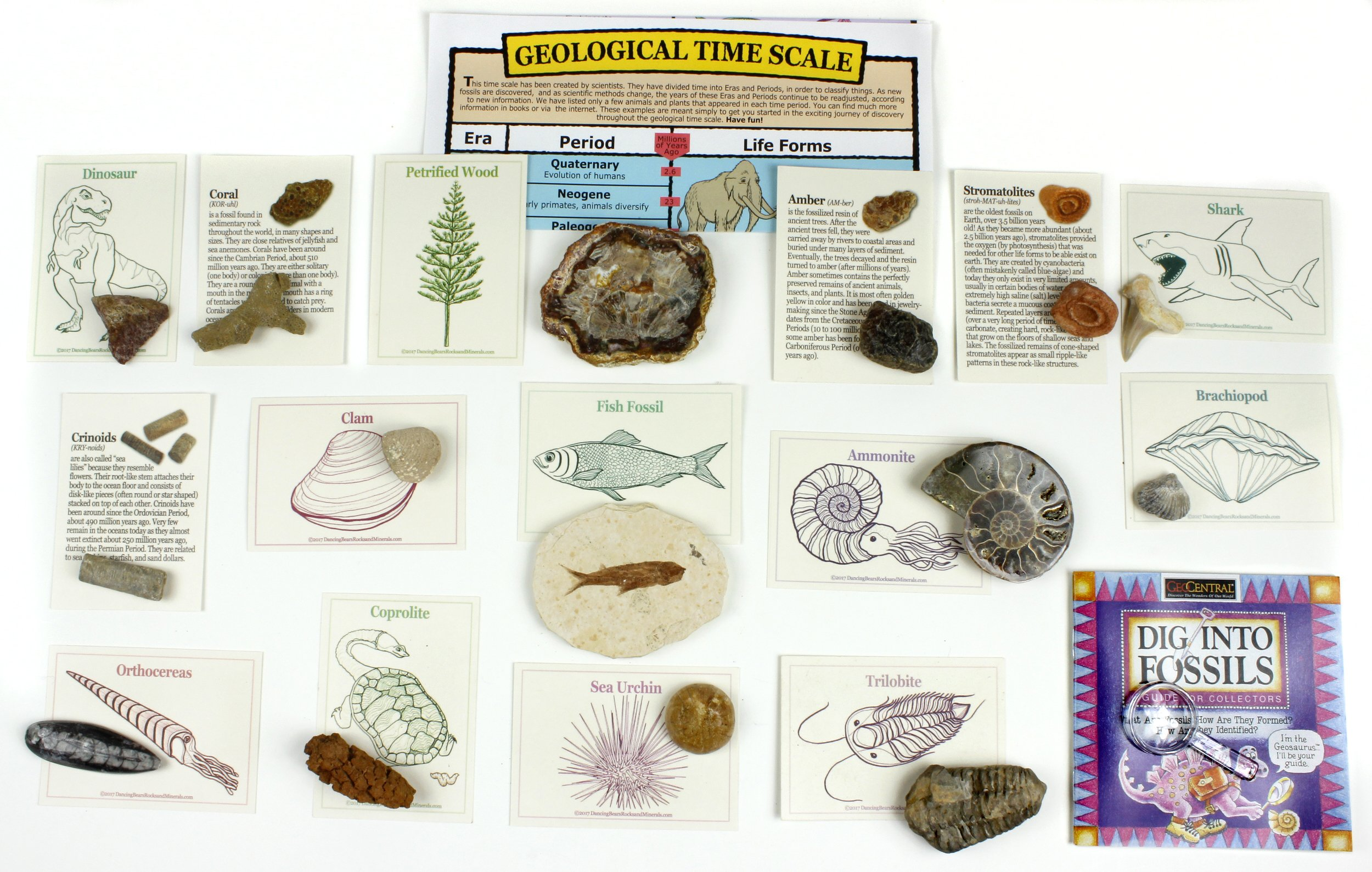 Dancing Bear Fossil Collection Set, 15 Real Specimens: Trilobite, Ammonite, Fish Fossil, Shark Tooth, Petrified Wood, Dinosaur Bone, Fossil Book, Time Scale, ID Cards, Magnifying Glass, Science Kit by Dancing Bear (Image #2)