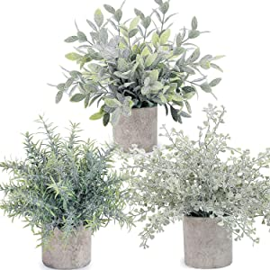LELEE Artificial Potted Plants Mini Fake Plants, 3 Pack Small Plant Potted Faux Rosemary Green Decorative Plant with Pot for Home Decor, Indoor, Office, Desk, Shelf, Table Decoration