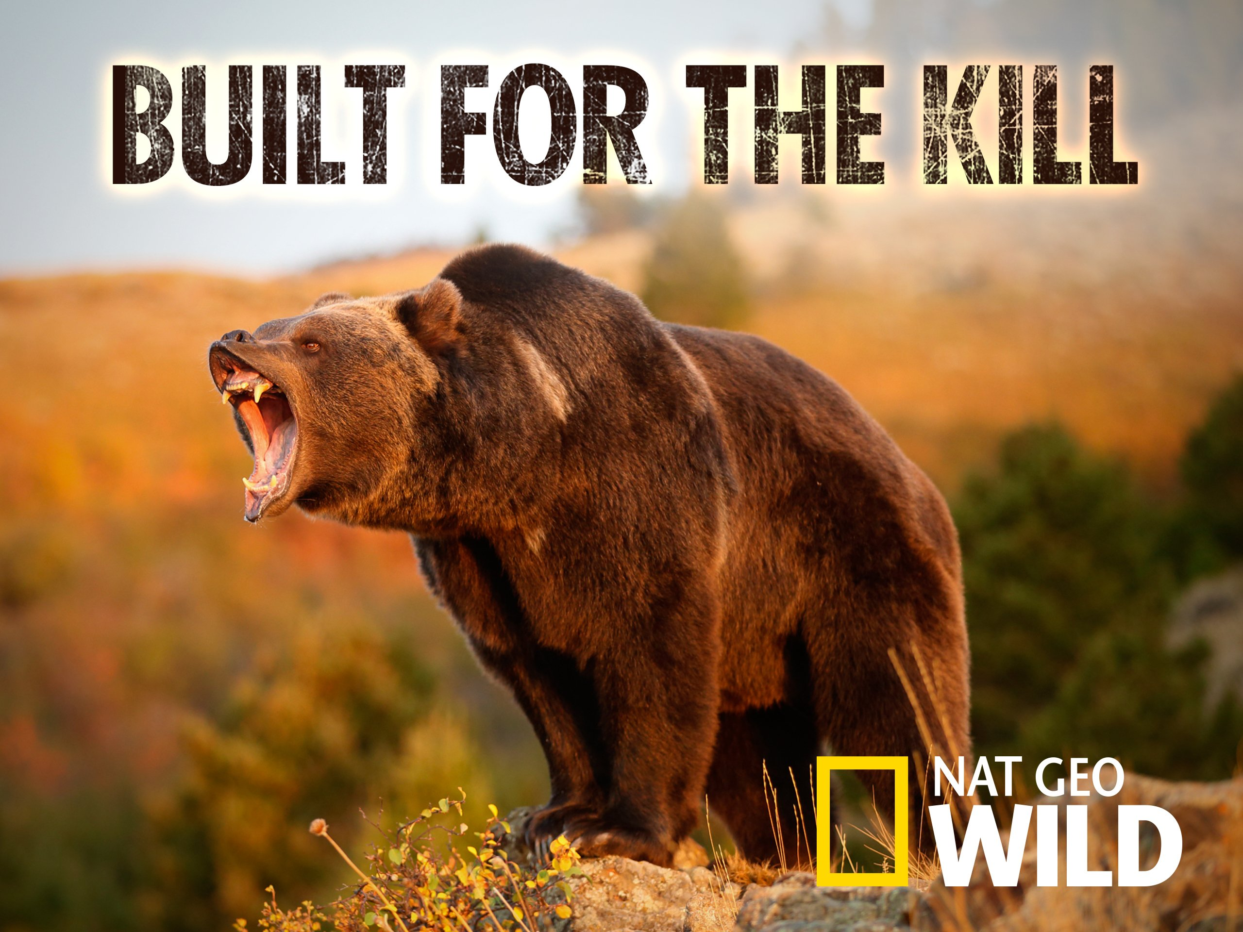 Amazon com: Watch Built for the Kill Season 1 | Prime Video