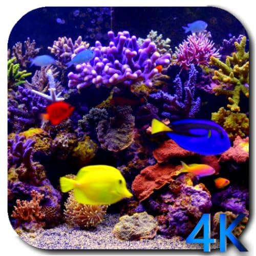 Aquarium 4k Video Live Wallpaper Amazon Com Au Mobile Apps