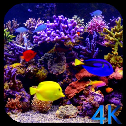 3d Aquarium Live Wallpaper: Amazon.com: Aquarium 4K Video Live Wallpaper: Appstore For
