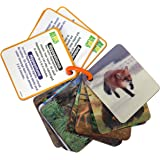 Animal Planet 3D Flash Cards - Wild Animals