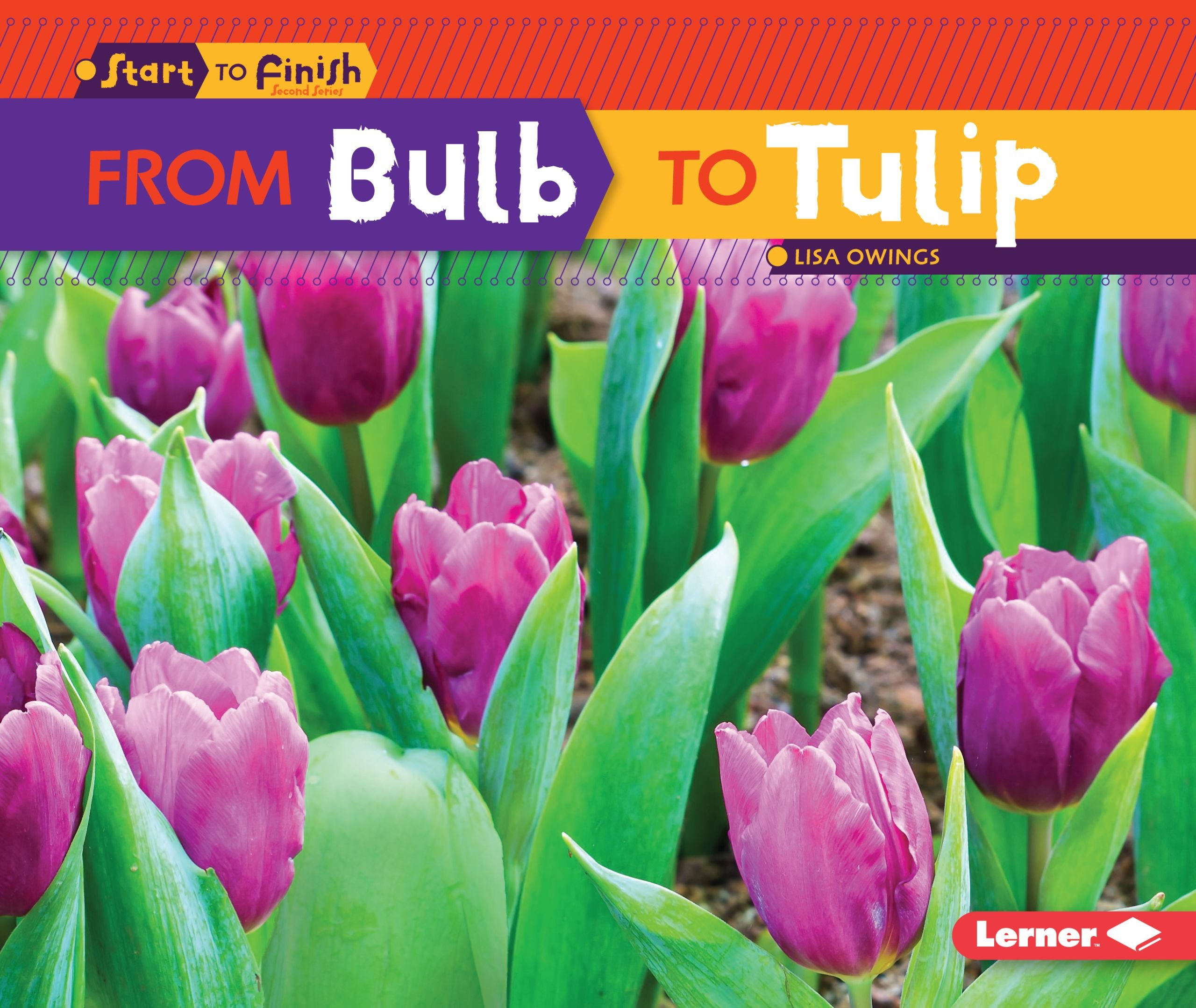 From Bulb To Tulip Start To Finish Second Series Owings Lisa
