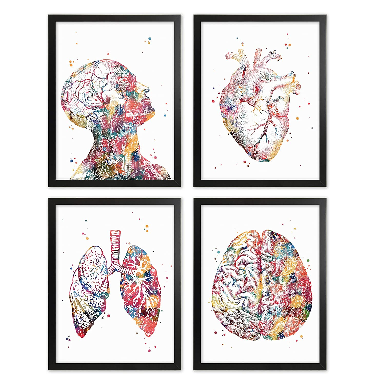 Human Anatomy Print Set Human Head Torso Wall Art Heart Artworks Lungs Wall Decor Brain Doctor Office Decor Medical Art Nurse Room Decor Great Gift for Doctors