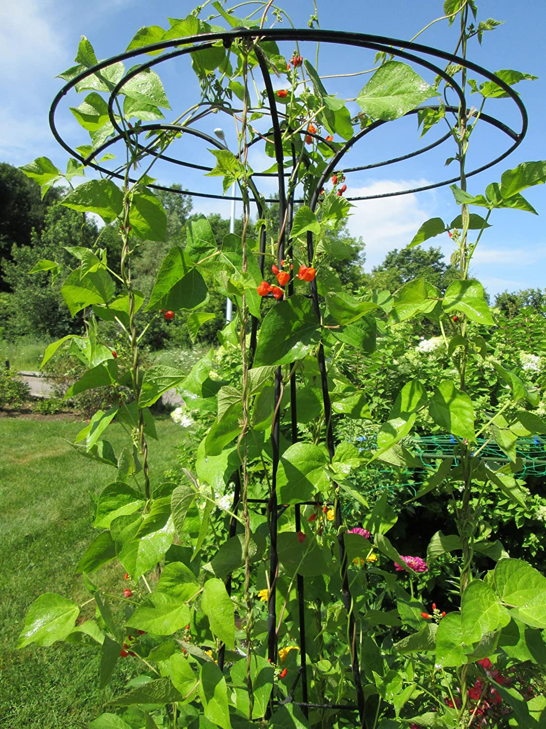 Amazon.com : Essex Trellis, Tall Decorative Flower And/or Vegetable Support  : Patio, Lawn U0026 Garden