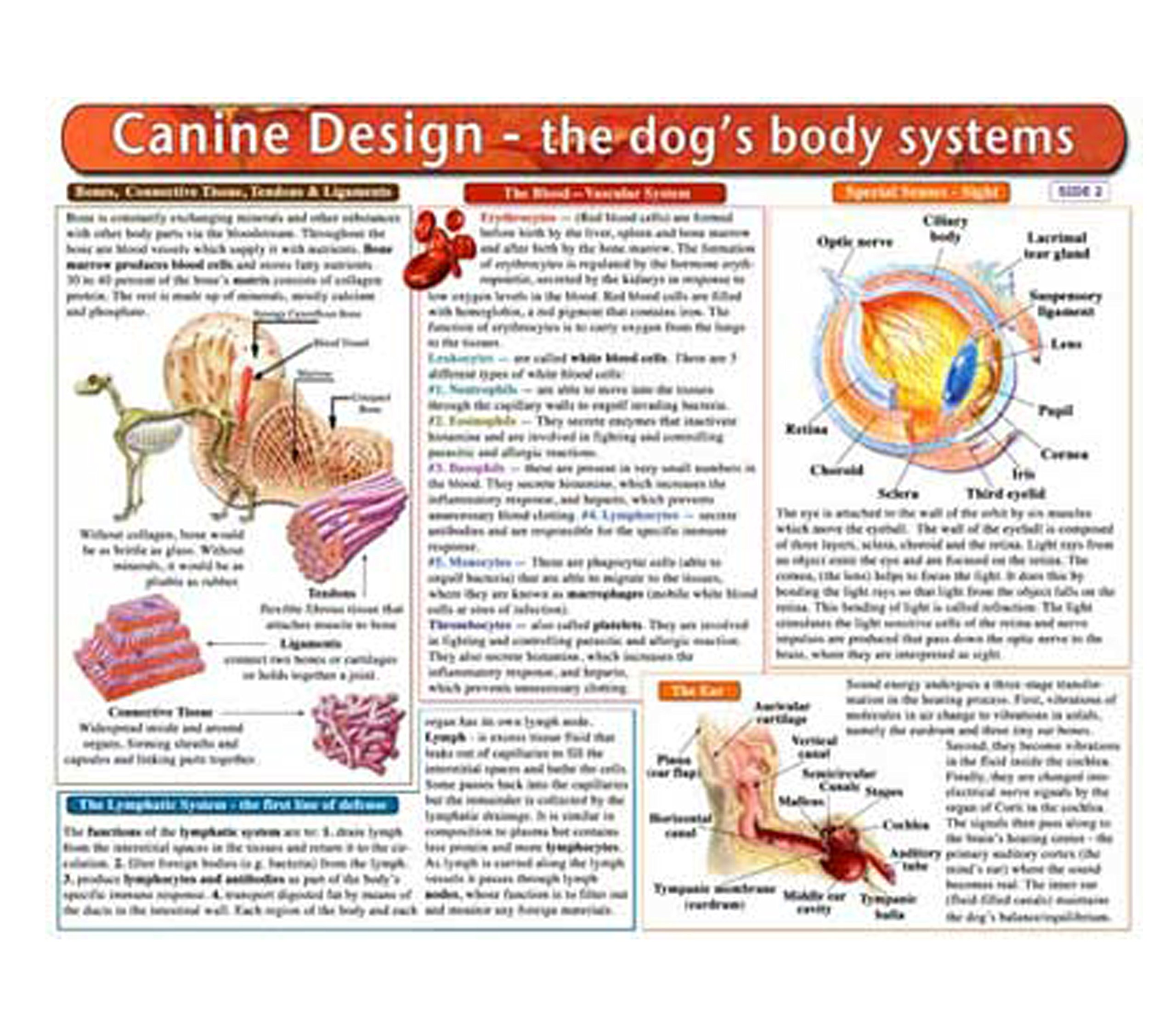 The Dogs Body Systems A Double Sided Uv Protected Laminated Dog