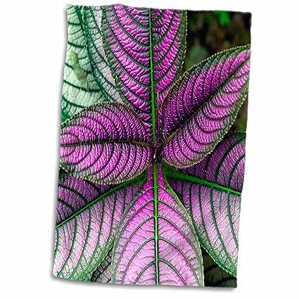 3dRose - Planta de protección Persa, diseño de Strobilanthes ...