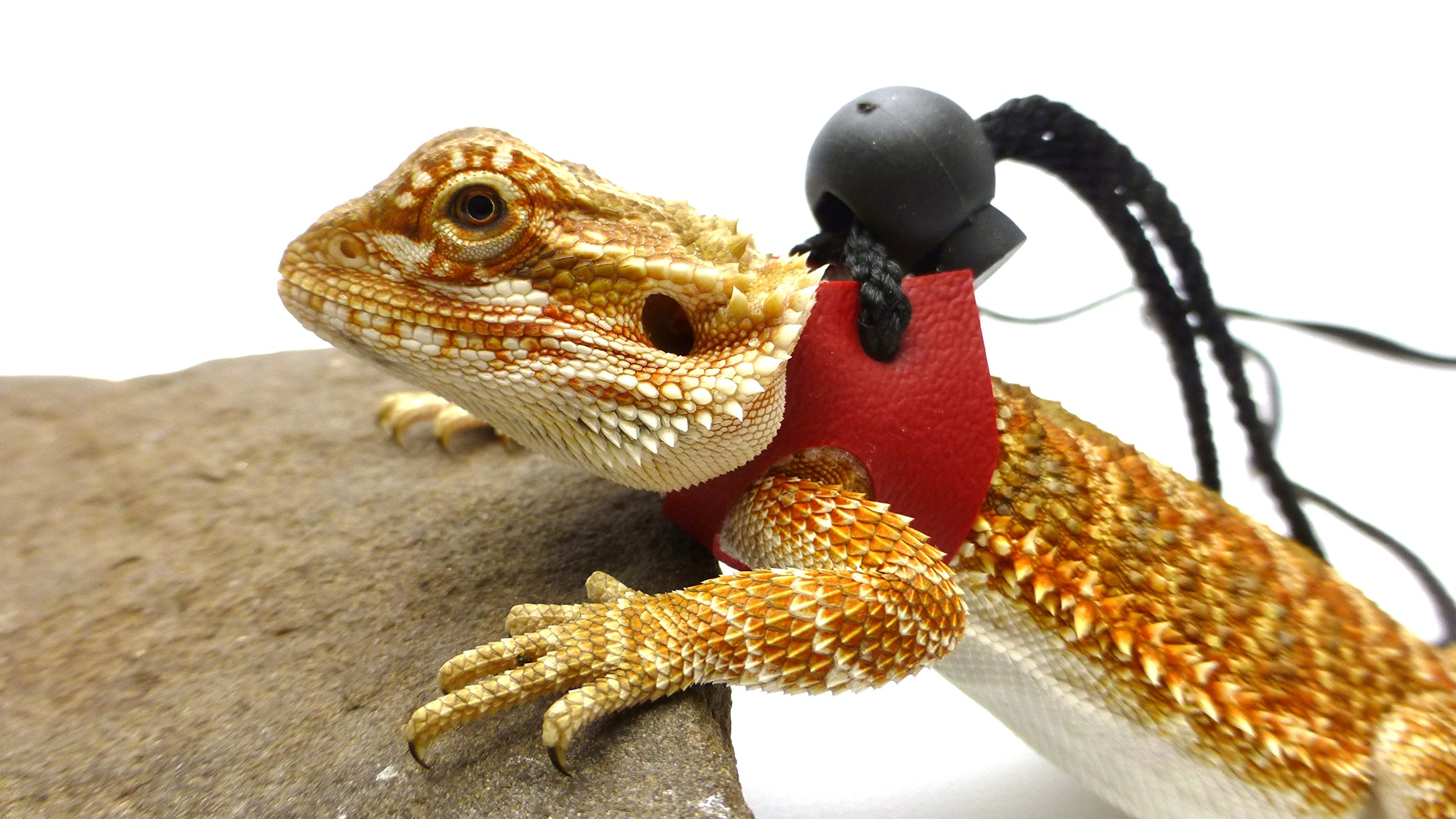Ogle Lizard Leash, Limited Edition Red (small size)