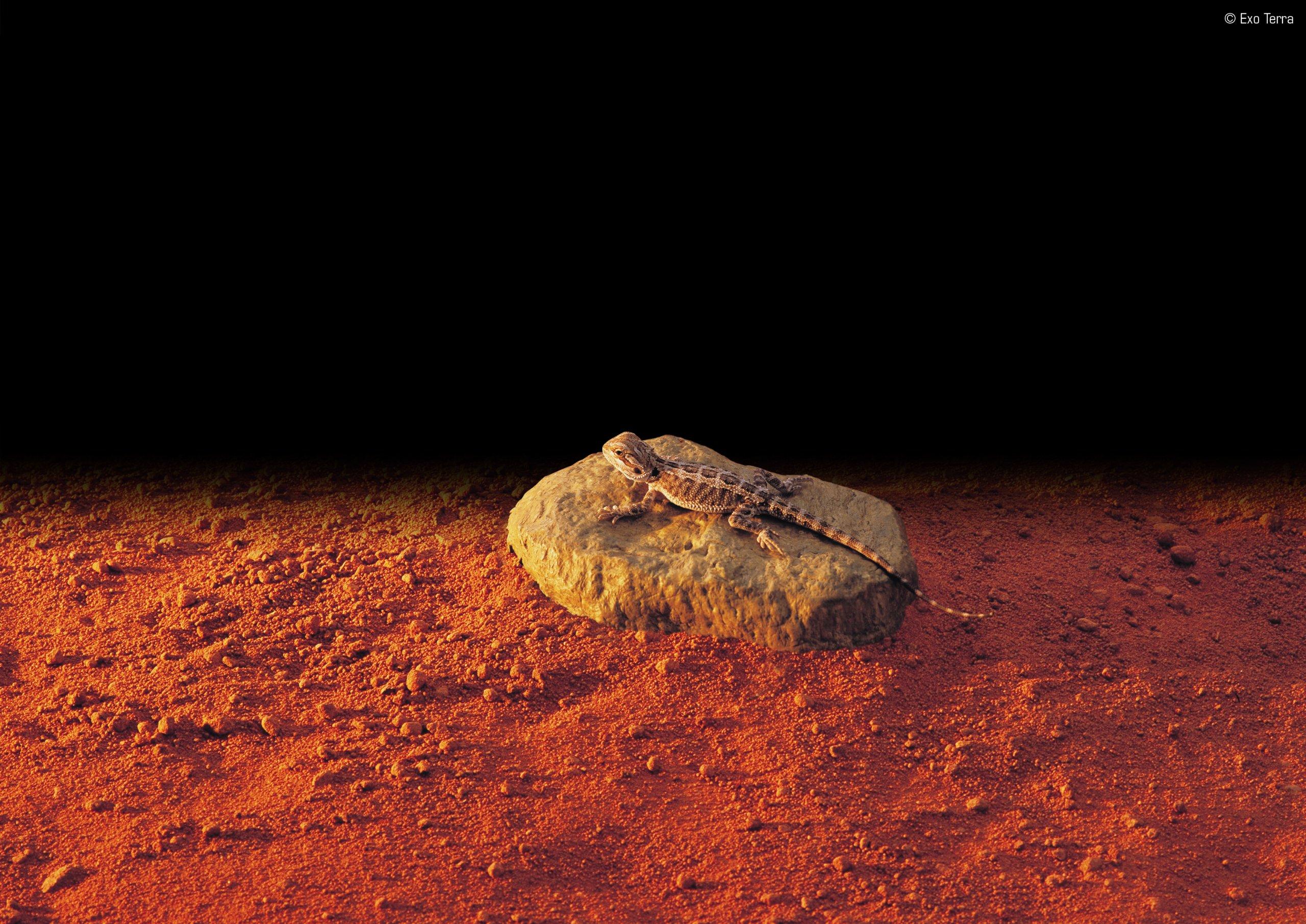Exo Terra Heatwave Rock, Ul Listed, Small by Exo Terra (Image #2)