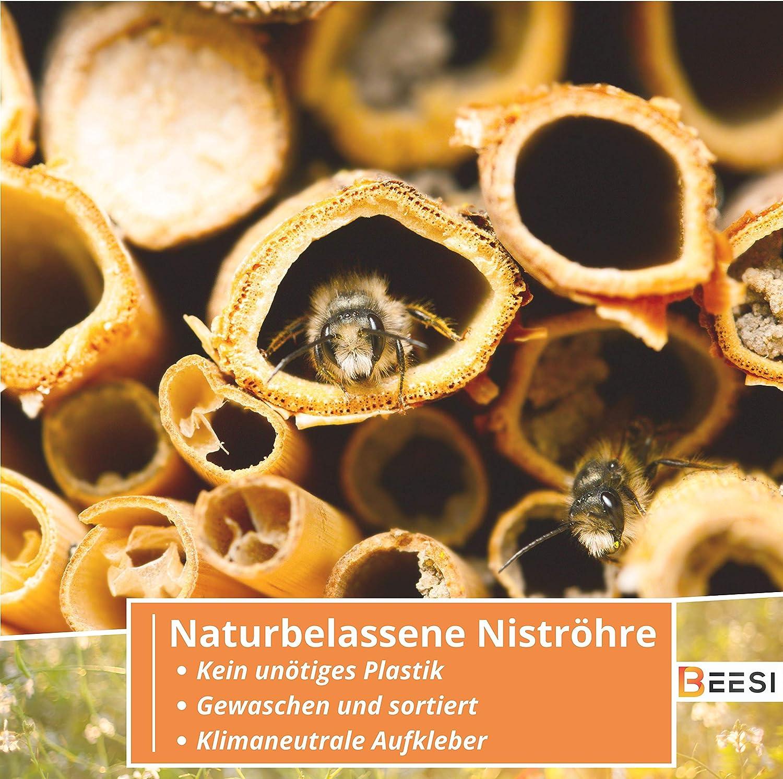 BEESI 200 Nisth/ülsen 20 cm lang f/ür Wildbienen Durchmesser 3-5 mm inkl E-Book I Nistr/öhren f/ür Insektenhotel I Nisthilfe f/ür Wildbienen
