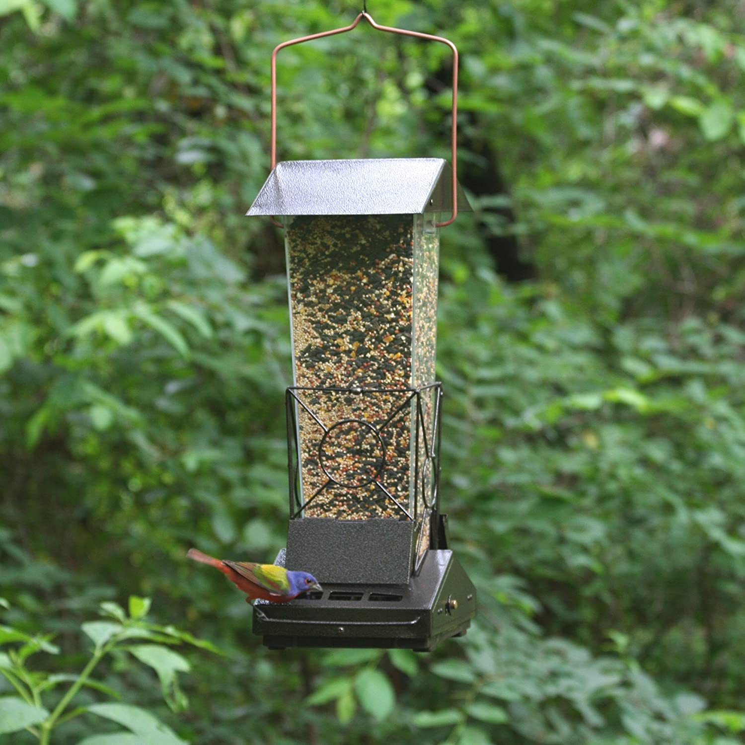 suet com zoom squirrel feeder bird baffled how proof duncraft to