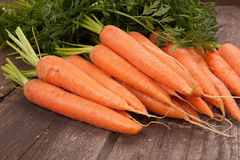 BIO - Zanahoria