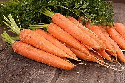 BIO - Zanahoria Berlikumer - semillas orgánicas certificadas - semilla