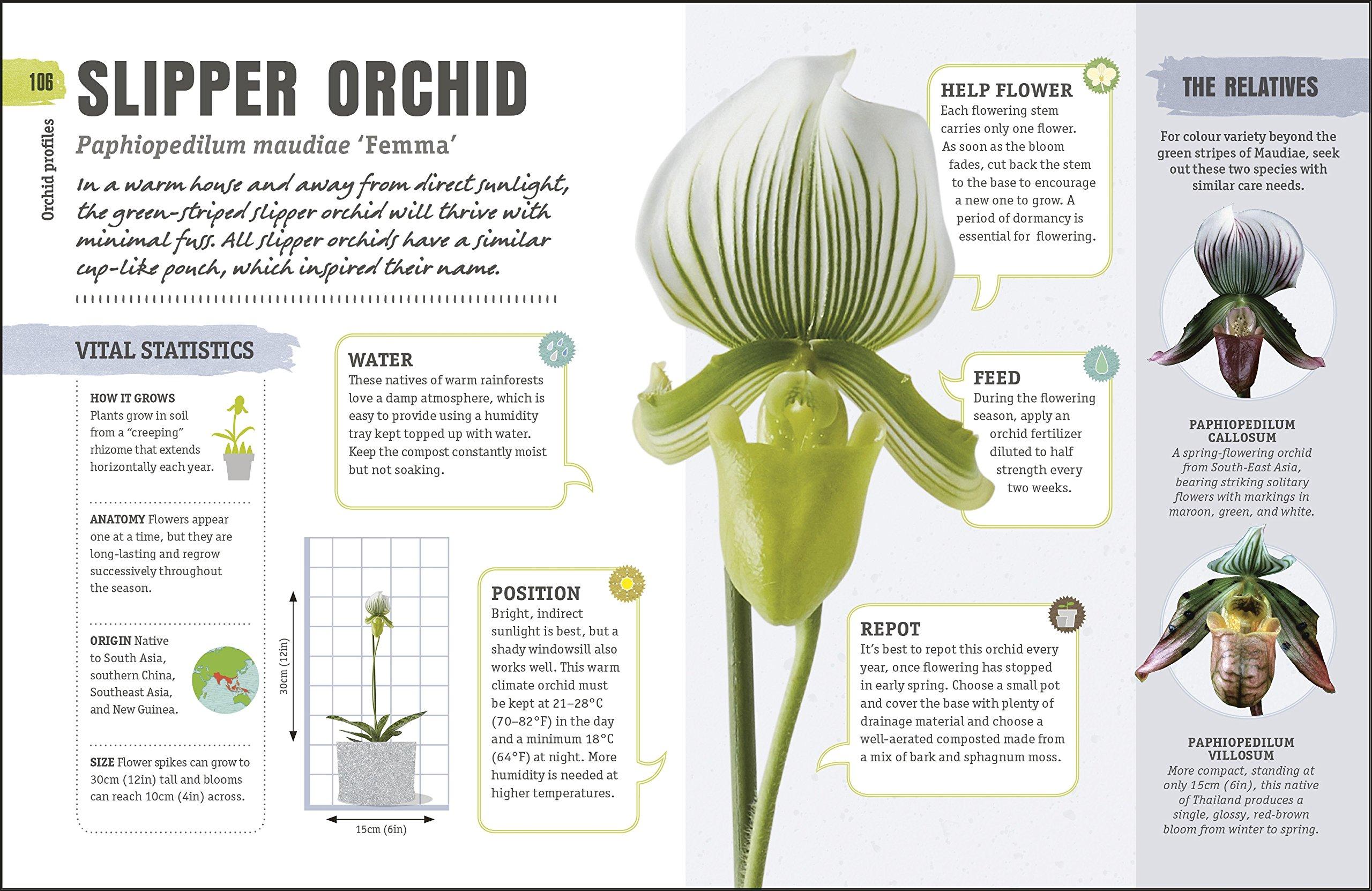Happy Orchid Help It Flower Watch It Flourish 9780241349229