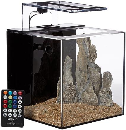 C aquarium