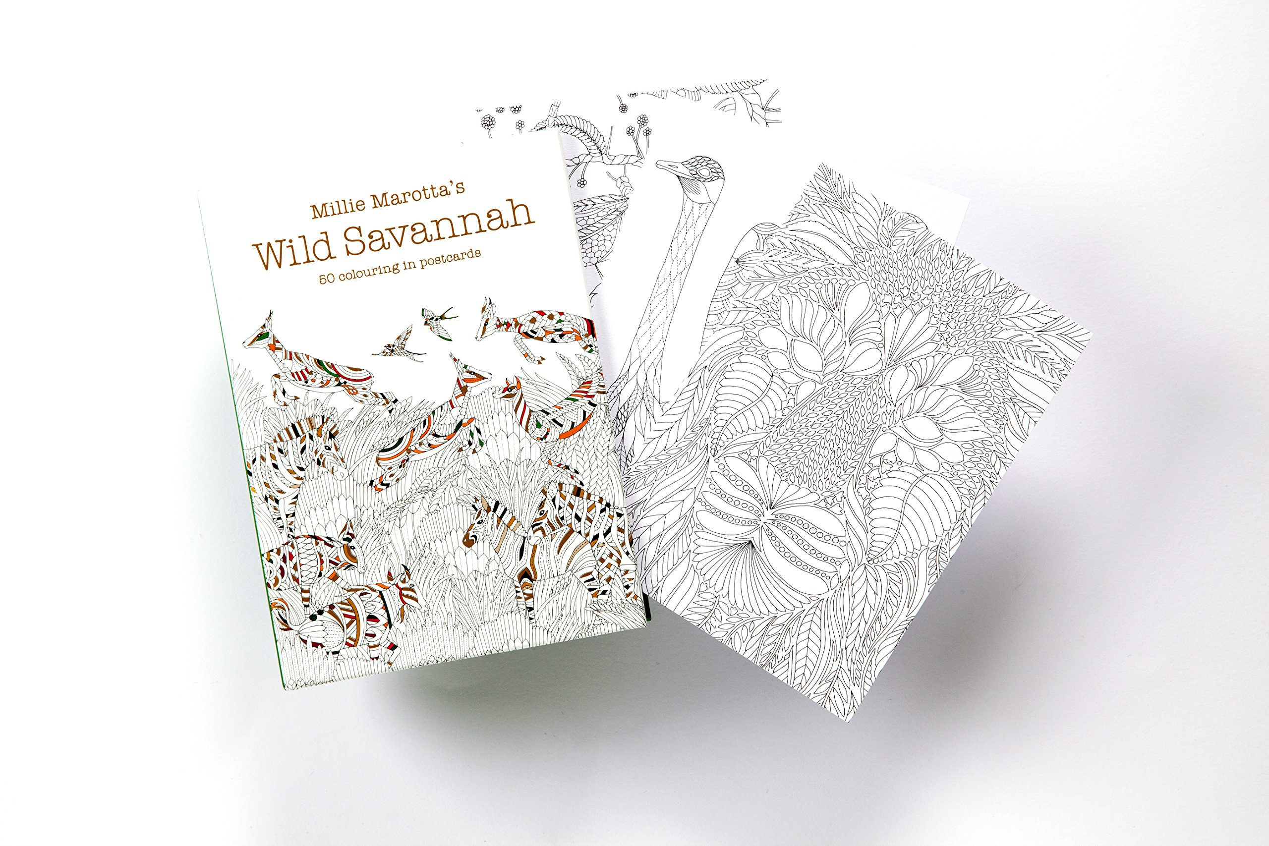 Millie Marottas Wild Savannah Postcard Box Amazoncouk Marotta 9781849943796 Books