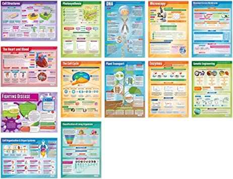 Amazon.com: Biología Cartel set| Conjunto de 13 Ciencia ...